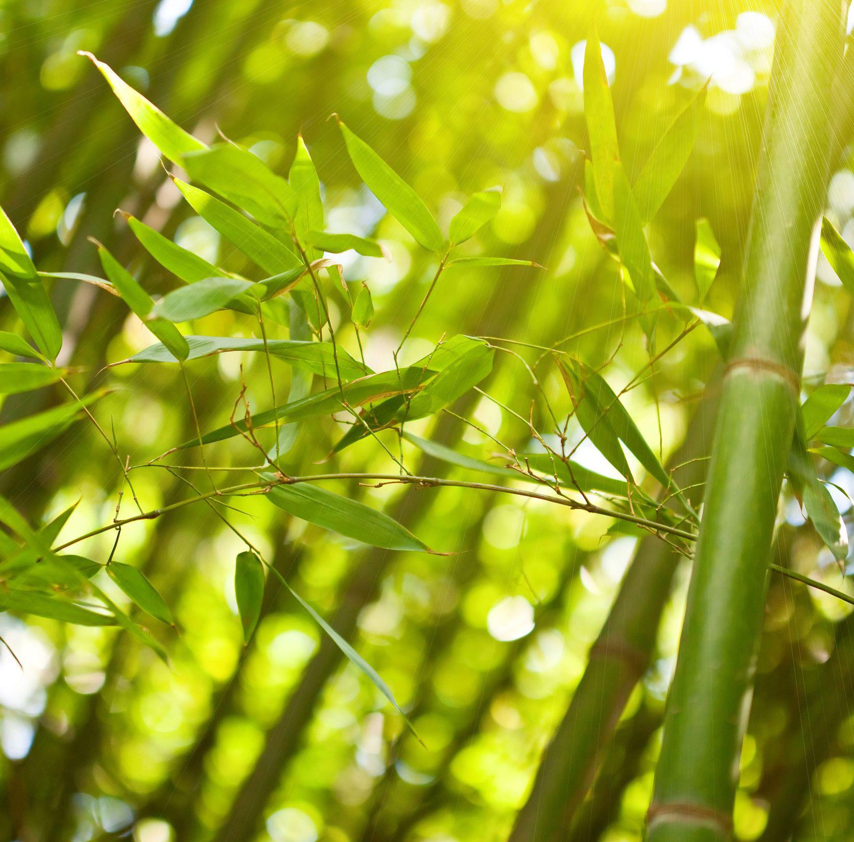 bamboe impressie 2